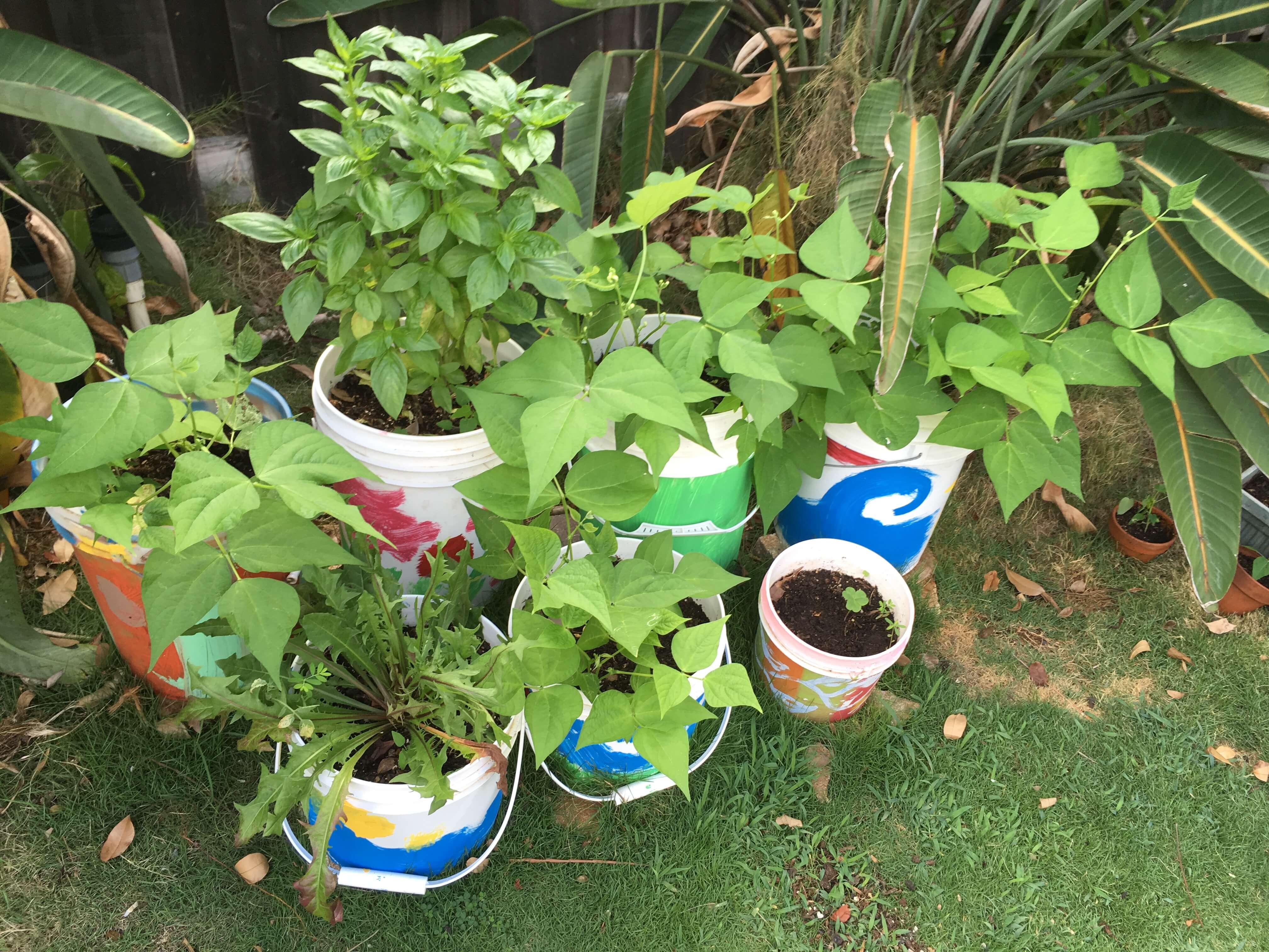 bucket gardens